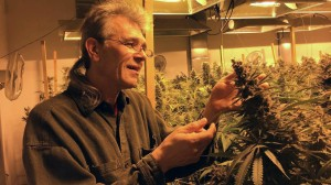 Chris Conrad wearing a hemp shirt as he examines a flowering cannabis plant in a California indoor medical marijuana garden, 2015.